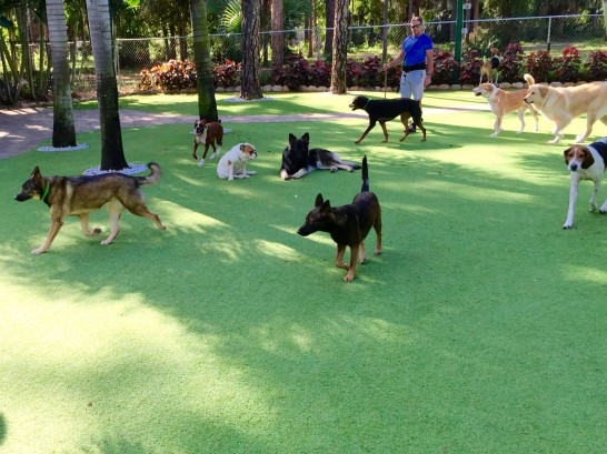 Fake Lawn Foxfire, North Carolina Dog Parks, Dogs artificial grass